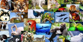 animales-extincion